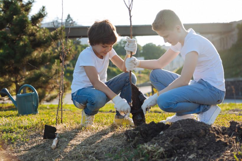 посадити дерево