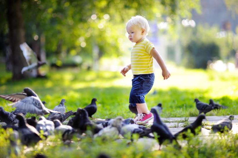 Ребенок в окружении птиц