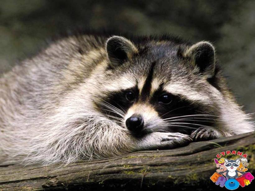 контактный зоопарк енотия