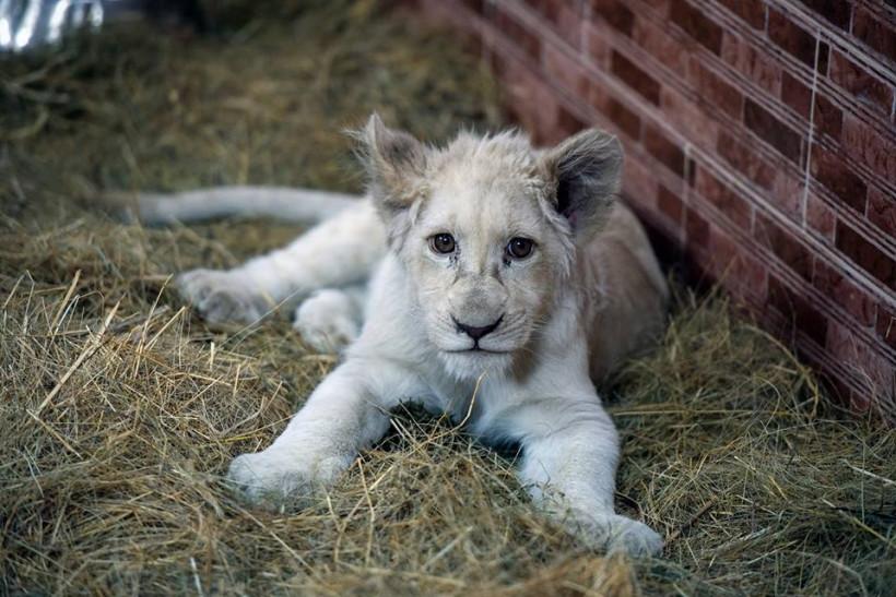 житель зоопарка