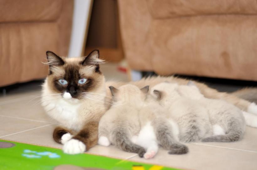 Рэддолл с котятами