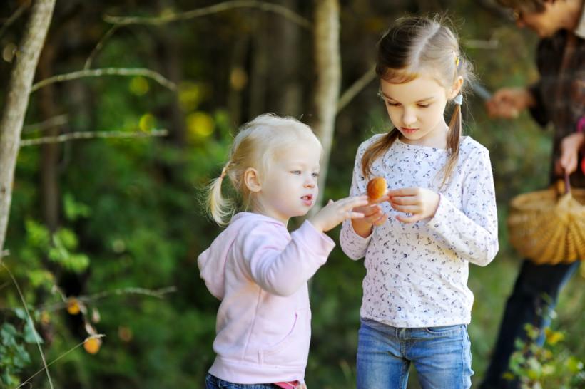 дети собирают грибы