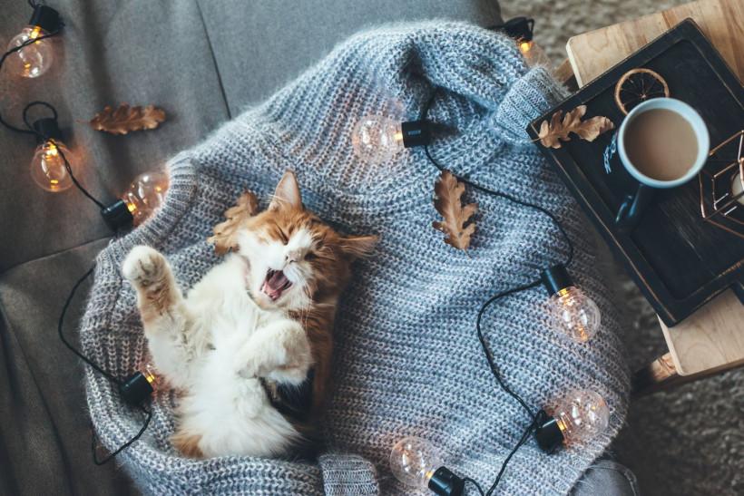 Кот на уютном полувере