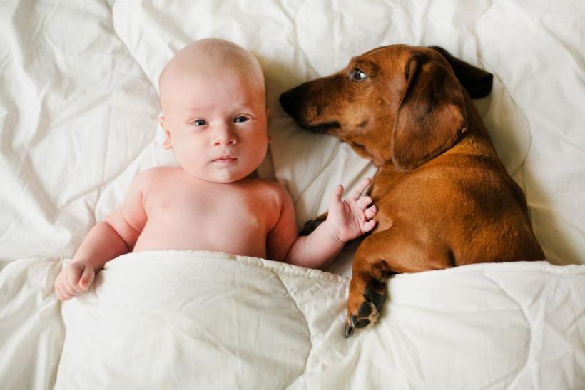новорожденный с собакой
