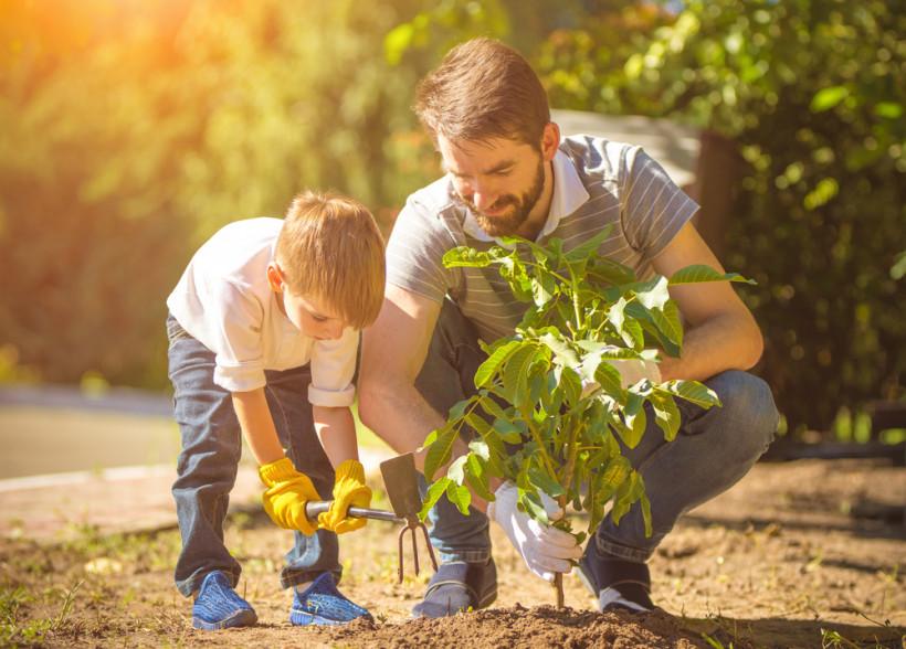 папа с сыном сажают деревья