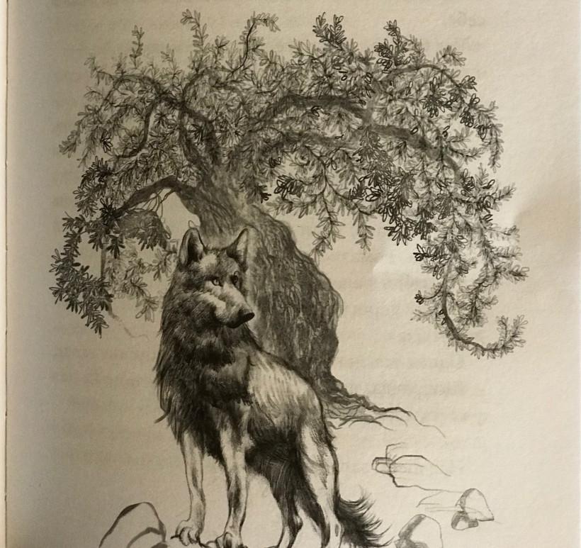 Волк - иллюстрация Надежді Дойчевой-Бут к книге Дрімучий ліс