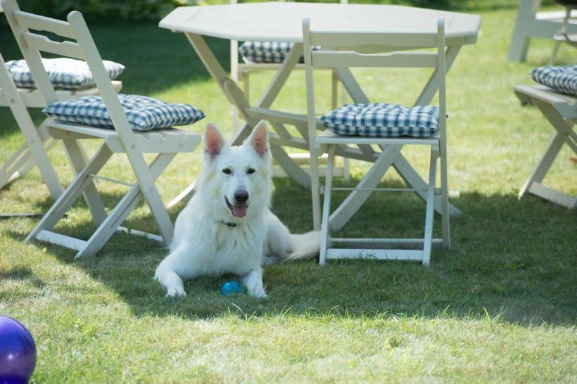 Собака Зеленского