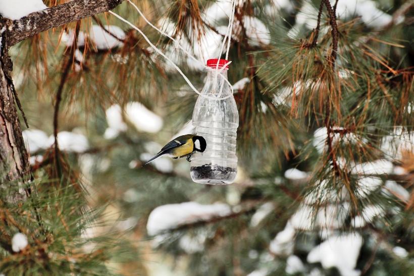 Как и чем кормить птиц зимой?