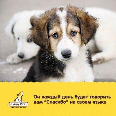 Фонд помощи животным