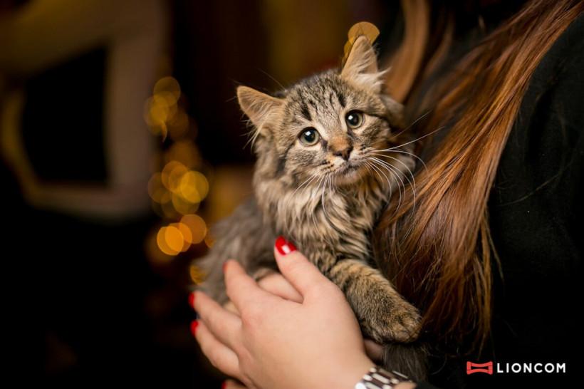 Котики ищут дом - на Jysk вечеринке