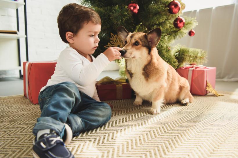 Рождество - ребенок и собака вместе