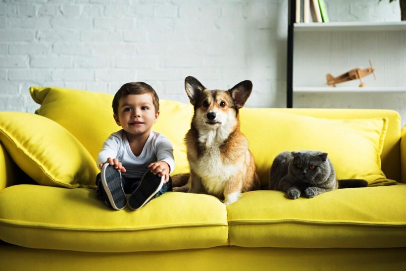 ребенок пес и кот