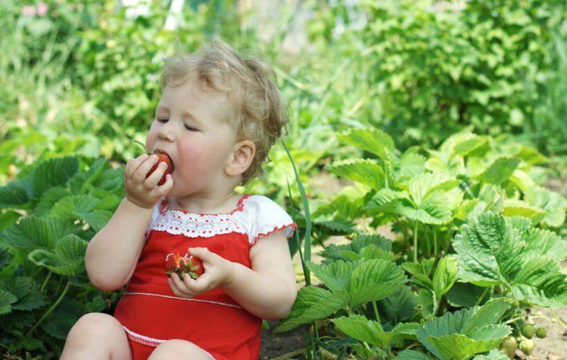Сладкая, но опасная: с какого возраста можно давать клубнику детям?