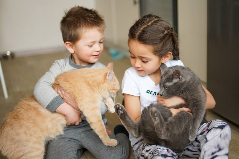 дети с котиками