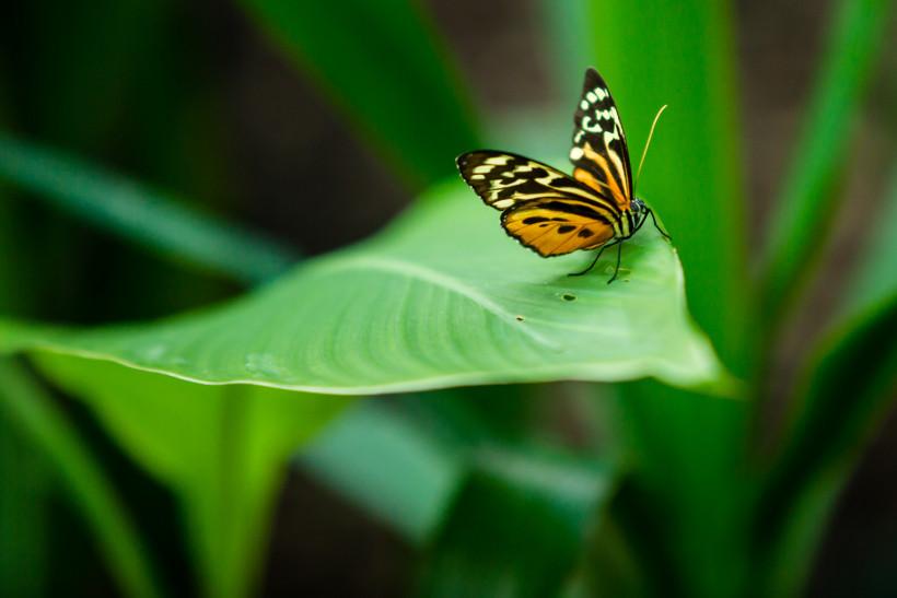 Каникулы в городе: Планета бабочек