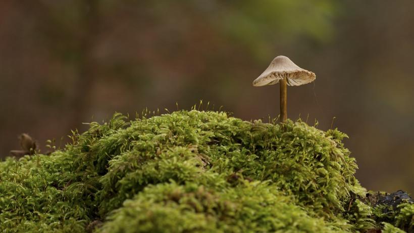 Фото гриба - эффект кадрирования
