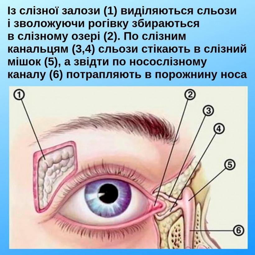 Глазки новорожденного - рисунок