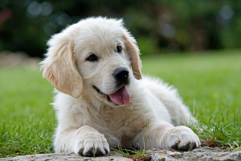 Пес демонстрирует покорность