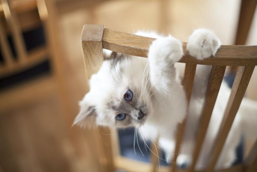 Кот готовится к нападению