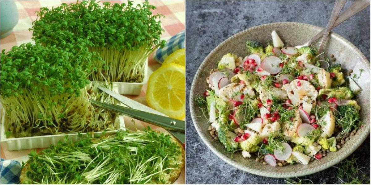 Крес-салат