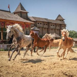 Лошади красивые